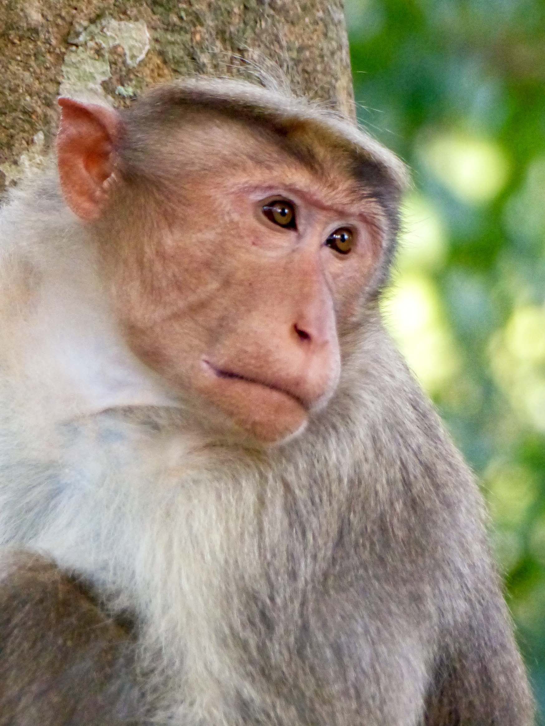 Head and shoulders shot of a monkey