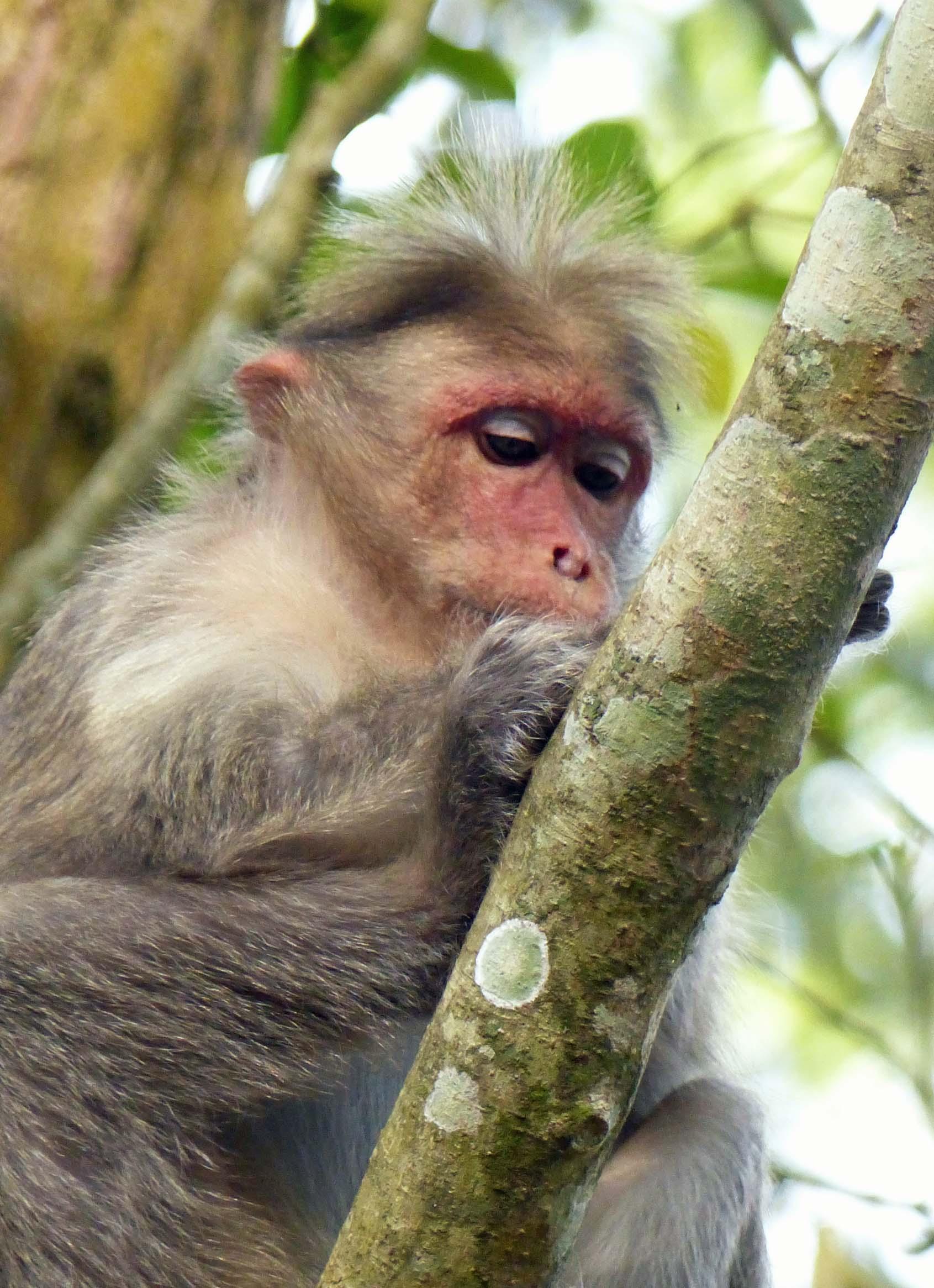 Baby monkey in a tree
