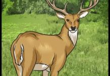 Drawing Tutorial: How to Draw a Deer