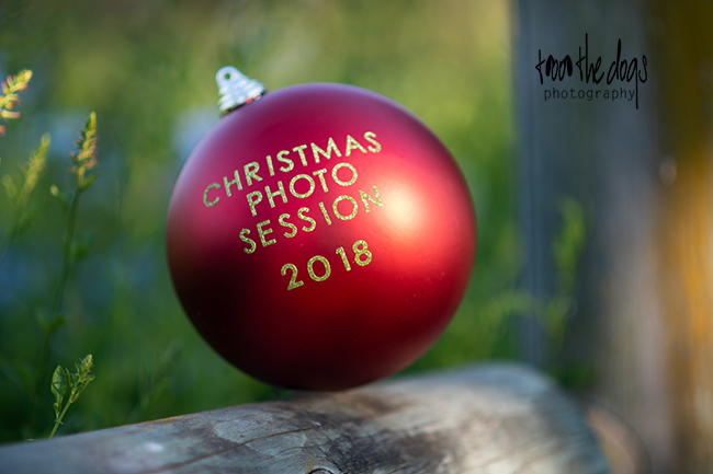 Christmas dog photography sessions