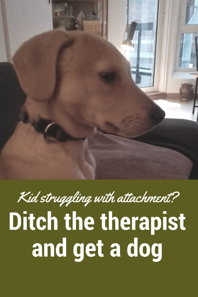Is your adopted kid struggling with attachment? Ditch the therapist and get a dog!