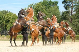 "Jump Together: Cadre Noir cadets getting their horses to perform the ""courbette"" (© Alain Laurioux - ENE)"