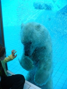 Cute Teddy Safely Behind Glass: A curious polar bear and child share a moment at La Palmyre Zoo