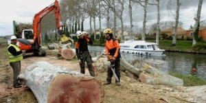 """""""It's for your own good!"""" Workers clear away hopelessly diseased trees while a hired cruiser is moored nearby"""
