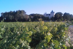 Morning Light: The vineyard in front of Carasses produces its own label of wine