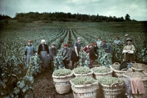 "Champagne harvesters in 1929: a year that was a good ""millésime"", unlike 2014, most likely"