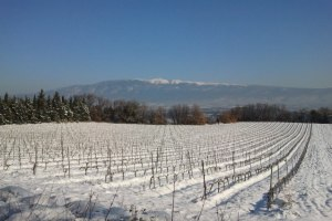Working to the rhythms of nature: The Domaine des Anges vineyard in winter