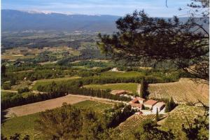 """""""Happy with what we've got"""" - an overview of the Domaine des Anges in the Vaucluse"""