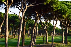 Playing amongst the trees: The golf course next to the apartments at Mimozas Resort