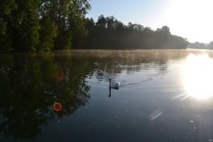 Morning glory reflected