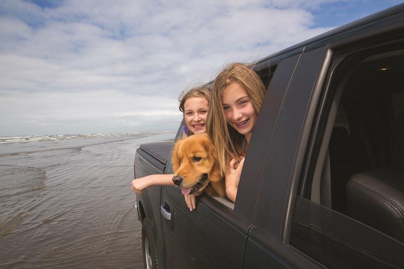 Brittany-Ferries-Pet-Travel.jpg