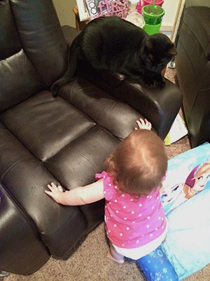 Introducing Your Baby to Your Cat