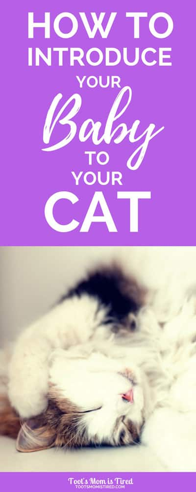 How to Introduce Your Baby to Your Cat | toddler and cat, how to prepare a cat for a baby, babies, cats, pets, motherhood, pregnancy, newborn, kitty, #babylife #pregnancy