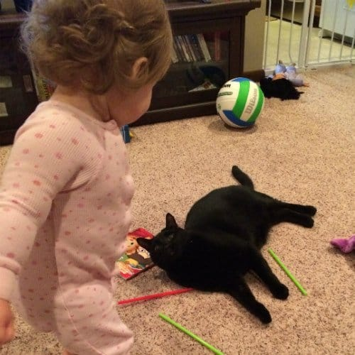 One year old standing next to a black cat