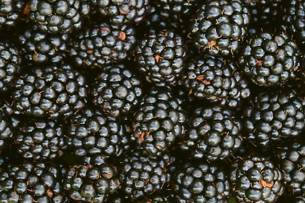 Are Blackcurrants Good For The Skin?