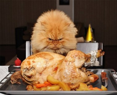 Ten Human Foods and Drinks That Are Bad for Cats