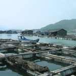 Aide d'élevage agricole et aquacole – Bilan annuel