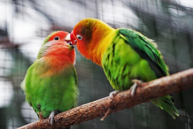 Ljube se!