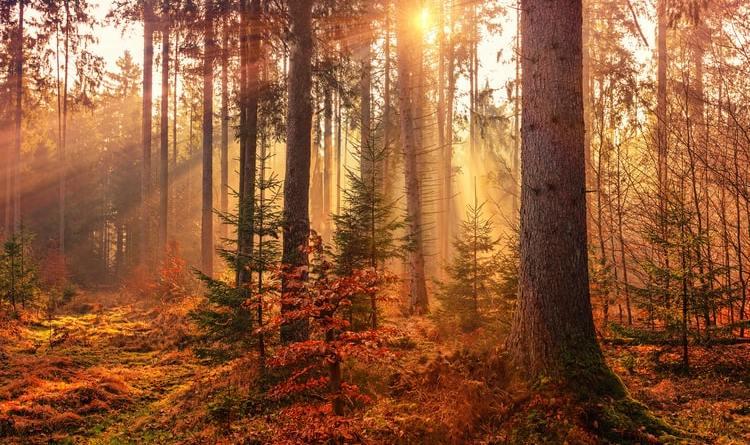 Leona Kablar: Jesenji orkestar