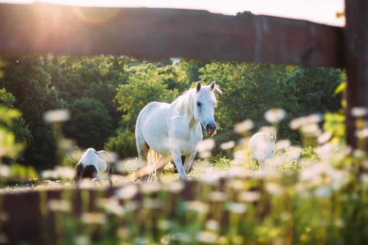 Grigor Pettener: Praznina jednog konja