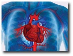 1. Previene enfermedades cardiovasculares