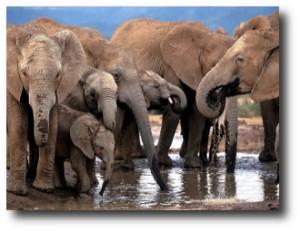 4. Elefantes