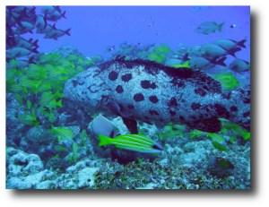 8. Arrecife de Aldabra, Seychelles