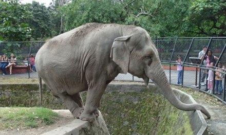 Los 10 animales más populares en los zoológicos