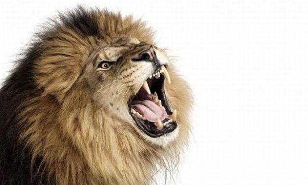 Los 10 animales más escandalosos del mundo