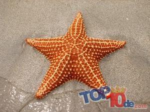 La estrella de mar