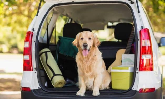 Las 6 cosas que necesitas para viajar con tu mascota
