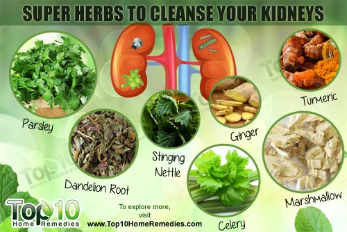 The Healing Power Of 10 Kidney Cleansing Herbs