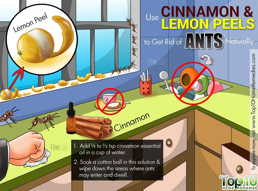 How to Get Rid of Ants Fast Naturally