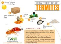How to Get Rid of Termites | Top 10 Home Remedies
