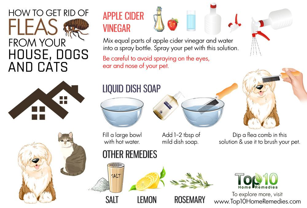 How to Get Rid of Fleas from Your House Dogs and Cats ...