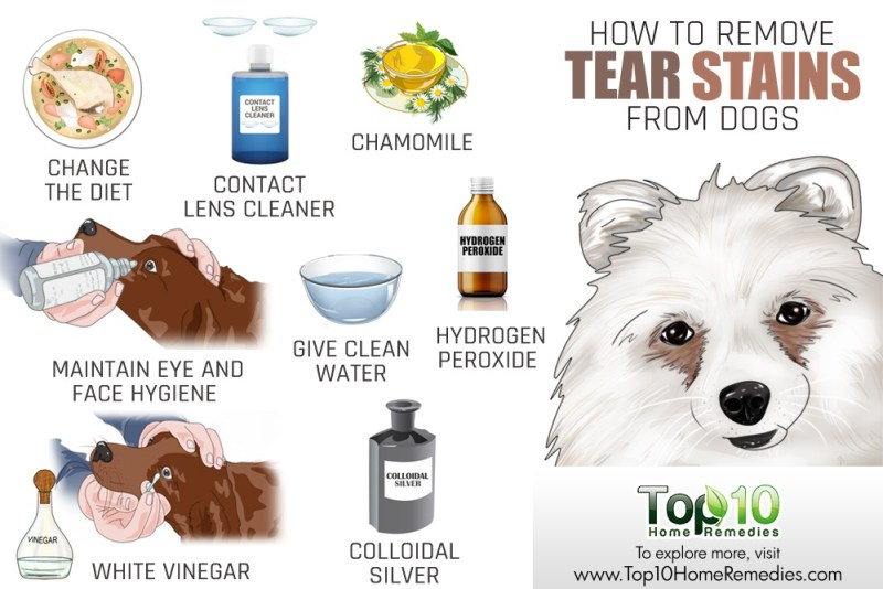 How To Remove Your Dog S Tear Stains