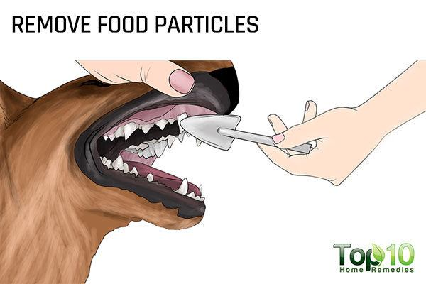 remove food particles from your dog's teeth
