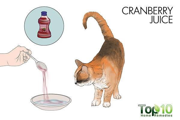 cranberry juice for cystitis in cats