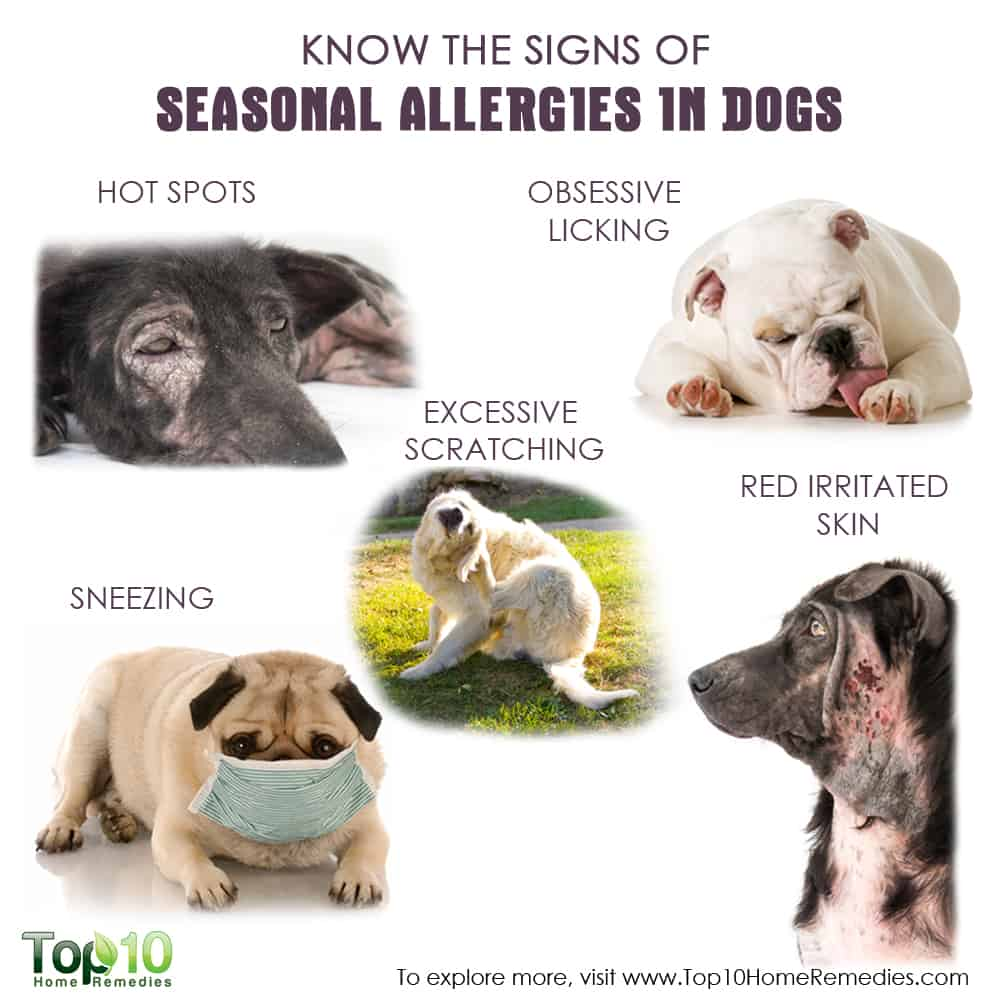 Know the Signs of Seasonal Allergies in Dogs | Top 10 Home ...