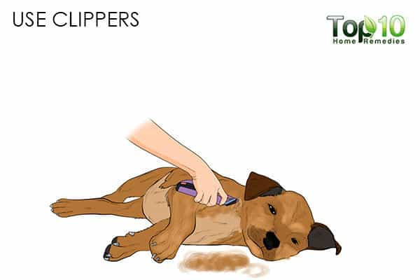 use clippers how to deal with matted hair on your cat and dog