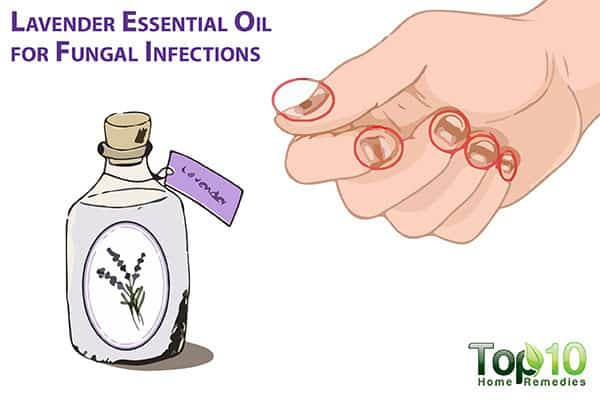 lavender oil for fungal infections