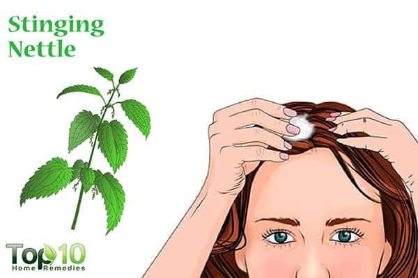 stinging nettle for hair loss