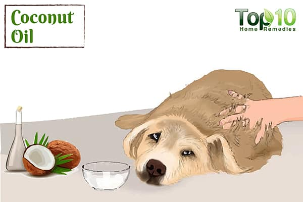 Home Remedies for Allergies in Dogs | Top 10 Home Remedies