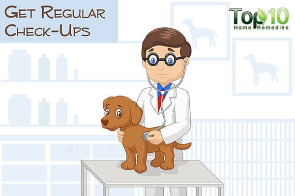get regular check ups for your aging dog