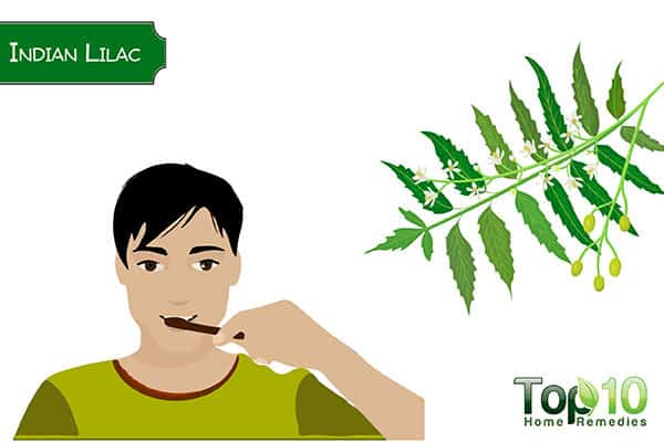use neem to whiten your teeth