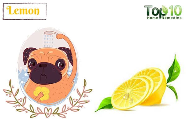 lemon for dog allergies