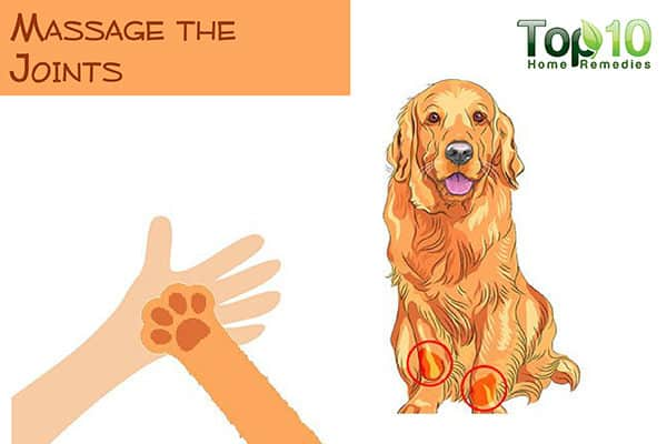 massage the joints of your older dog