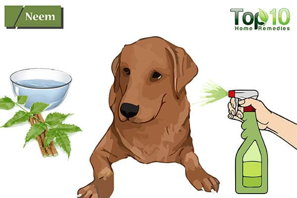 neem to treat hot spots on dogs