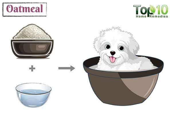 oatmeal bath for dog itching