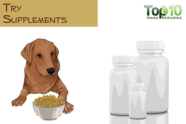 try supplements for your aging dog